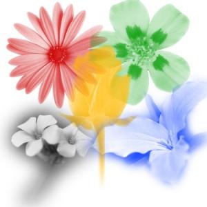 Photoshop brush flower 300x300 Кисть для Photoshop   Цветы