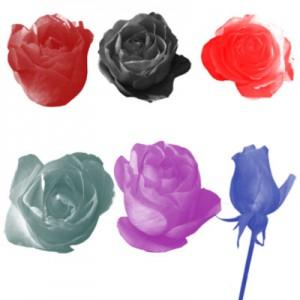 Rose 300x300 Кисть для фотошопа   Бутоны Роз.