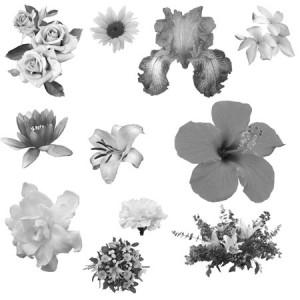 Yanagi.flowers 300x300 Кисть для фотошопа   Цветочный мир