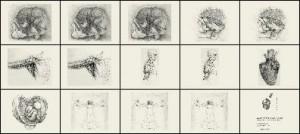 absin2 300x134 Кисть для фотошопа   Медицинские рисунки Давинчи