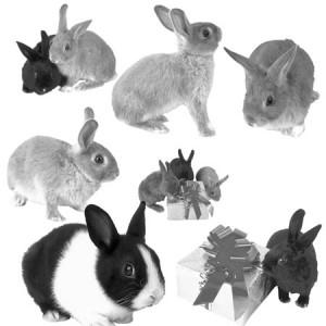 petercottontai 300x300 Кисть для фотошопа   Кролики, зайцы